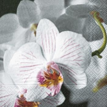 Beautiful orchidee - Servietten 33x33 cm