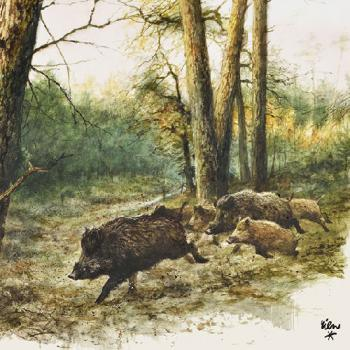 Wild Boar in the woods | Wildschweine - Servietten 33x33 cm