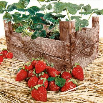 Strawberry case - Servietten 33x33 cm